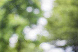 bokeh grön bakgrund foto