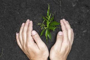 mänsklig hand plantera ett träd på vit bakgrund, rädda jorden koncept foto