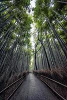 arashiyama bambuskog i kyoto, japan foto