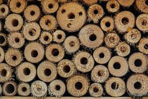 tvärsnitt av staplade klippta trädstammar. bakgrundskonceptbild. foto