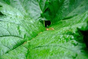 närbild av ett grönt blad. bakgrund för ekologiska applikationer. foto