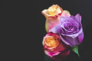 tre färgglada rosor mot svart bakgrund, med kopieringsutrymme foto