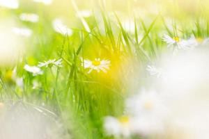 soligt fält av tusenskönor vårbakgrund foto