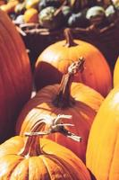 närbild av pumpor på bondens marknad höstbakgrund foto