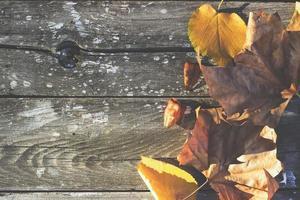höstbakgrund - fallna blad på träbakgrund foto