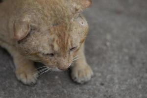 smutsiga hemlösa katter på gatorna, ensam hemlös katt, bakifrån av katt foto