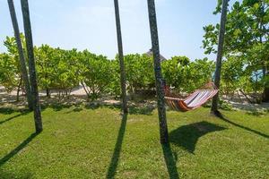 tropisk strand med hängmatta under palmerna i solljus foto
