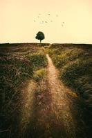 träd i naturlandskapet bakgrund foto