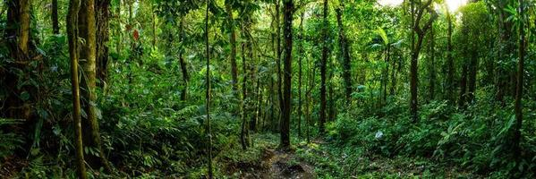 arenal vulkan i Costa Rica foto