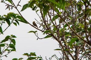 grönfink fågel som letar efter mat foto