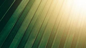 tropisk grön kokosnötblad textur bakgrund, mörk ton med soluppgång. foto