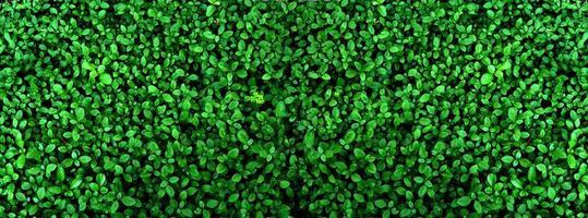 tropiskt grönt blad, kontrast foto