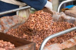 jästa och färska kakaobönor som ligger i trälådan foto