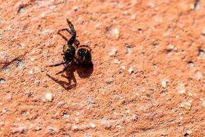 spindel i solen foto