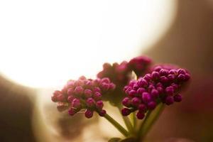 naturen blommar foto