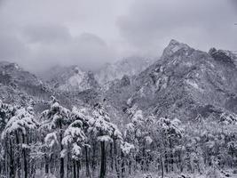 tallskog under snön och stora berg i bakgrunden. Seoraksan National Park, Sydkorea. vintern 2018 foto
