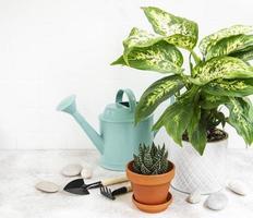 ett hus planterar i blomkrukor och grön vattenkanna foto