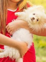 barn och djur koncept. vit pomeranian spitz valp i armarna på en flicka i en röd klänning. foto