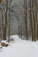 vinter skog landskap foto
