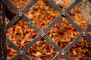 gula höstfallna blad bakom metallstaket foto