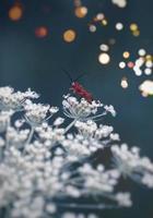 insekt på blomman foto