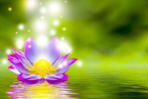 en vacker rosa lotusblomma eller lotusblomma i poolen foto