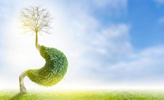 trädet .mage. är en 3d illustration av det medicinska miljöbegreppet. foto