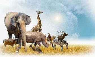 afrikansk safari och asiatiska djur i temaillustrationen, fylld med många djur, en vit kantbild foto