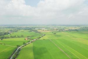 fältris med bakgrund för grönt mönster för landskapsmönster foto