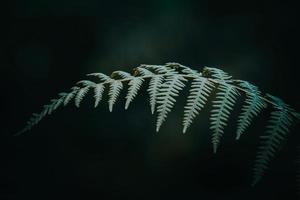 gröna ormbunksblad under vårsäsongen foto