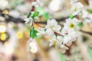 grenar med vita sakura blommor på en suddig bakgrund med bokeh foto