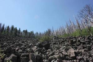 ståtlig utsikt över träd av förkolnade träd som återvinner gila nationalskogen efter en brand foto