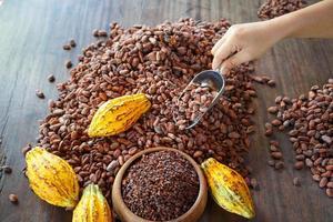 torra kakaobönor och kakaofrukt på ett träbord foto