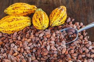 kakao fröskidor och kakaobönor på en trä bakgrund foto