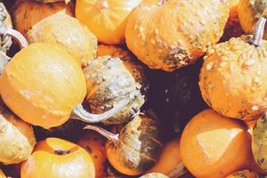 hög med dekorativa mini-pumpor och kalebasser, på lokala bönder marknadsför höstbakgrund foto