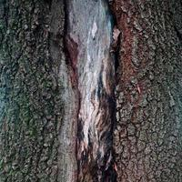 trä texturerat abstrakt bakgrund foto