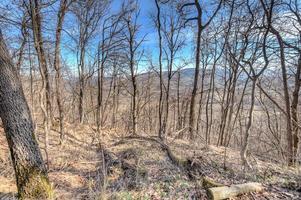 skog som omger zavattarello, norra Italien foto