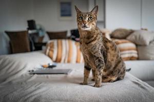 en söt savannakatt på en soffa foto