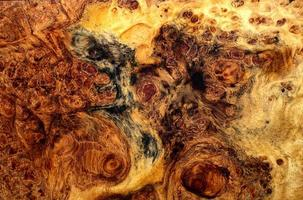 natur burl trä randig foto