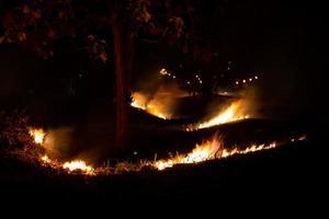 eld över den vilda sidan av vägen, flamman av brinnande på natten foto