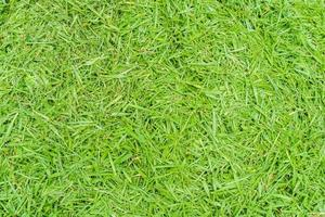 ovanifrån foto, grönt gräs textur bakgrund foto