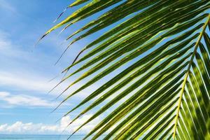 vacker kokosnötpalm under blå himmel på den tropiska stranden och havet foto