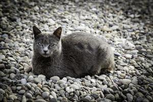 grå katt på gatan foto