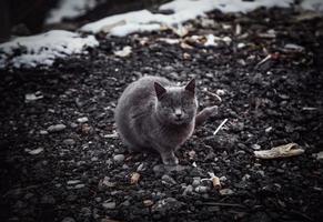 svart katt på snö foto