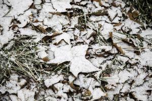 grönt gräs i snön foto
