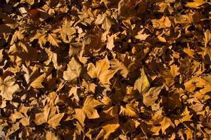 höstlöv föll på golvet i madrid foto