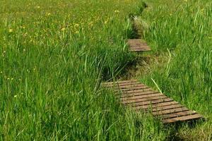 le noir pres natur vildblomma reservtröja Storbritannien foto