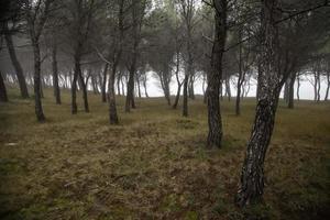 mörk skog i dimman foto