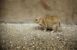 tillfällig katt i staden foto