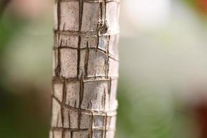 makrobild av trä foto
